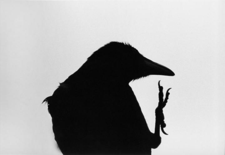 Eromo Cape, 1976